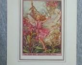 Rose-Bay Willow-Herb Flow...