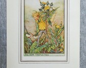 Sow Thistle Flower Fairy ...