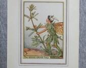 Goose-Grass Flower Fairy ...