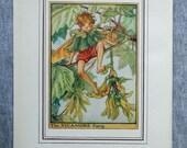 Sycamore Flower Fairy Vin...