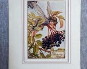 Elderberry Flower Fairy V...