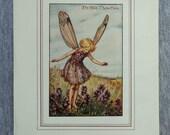Wild Thyme Flower Fairy V...