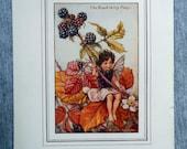 Blackberry Flower Fairy V...