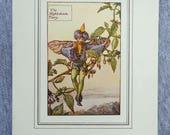 Nightshade Flower Fairy V...