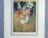 Narcissus Flower Fairy Vi...