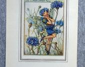 Cornflower Flower Fairy V...