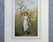 Stitchwort Flower Fairy V...