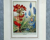 Polyanthus & Grape Hyacin...