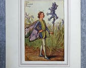 Bluebell Flower Fairy Vin...