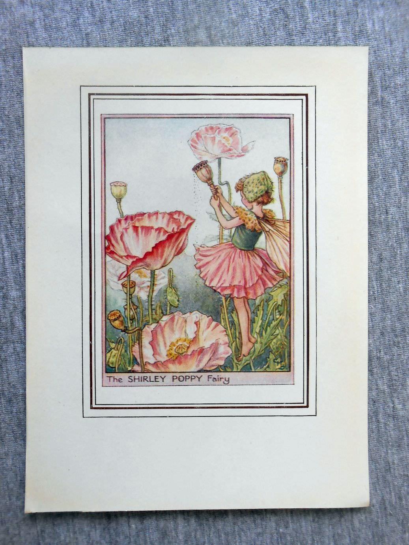 Shirley Poppy Flower Fairy Vintage Print C1950 Cicely Mary Etsy