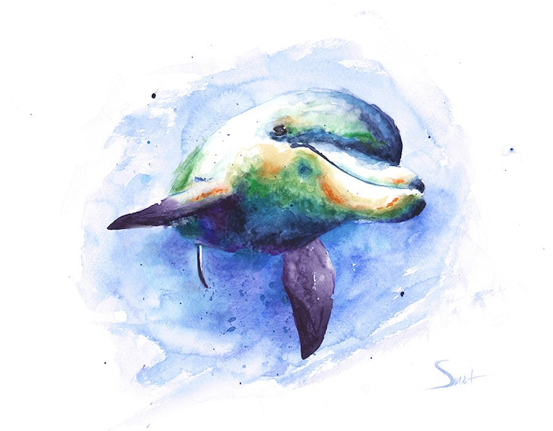 Watercolor DOLPHIN Print  Artist Eric Sweet image 0