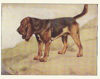 Bloodhound by Vernon Stokes 1906 colour dog print Hound Dog Wall Art Home Decor Vintage Print Colour Print