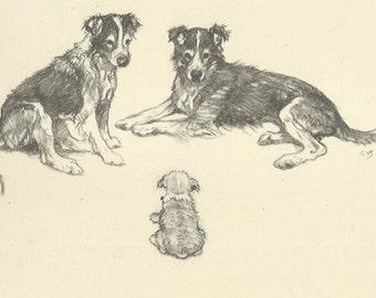 Border Collies by Vernon Stokes 1944 antique dog print Herding Dog Working Dog Farm Dog Wall Art Home Decor Vintage Print