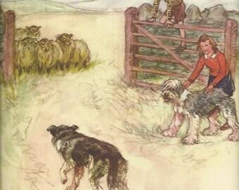Old English Sheepdog Border Collies and Sheep by Vernon Stokes 1944 colour dog print Shepherd OES