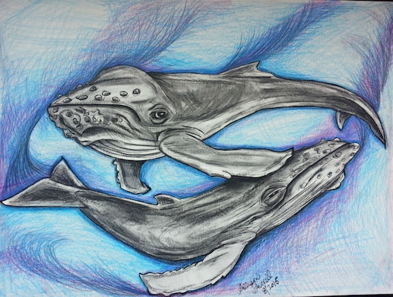 Original Humpback Whale Drawing on Paper Color Pencils and Charcoal OOAK