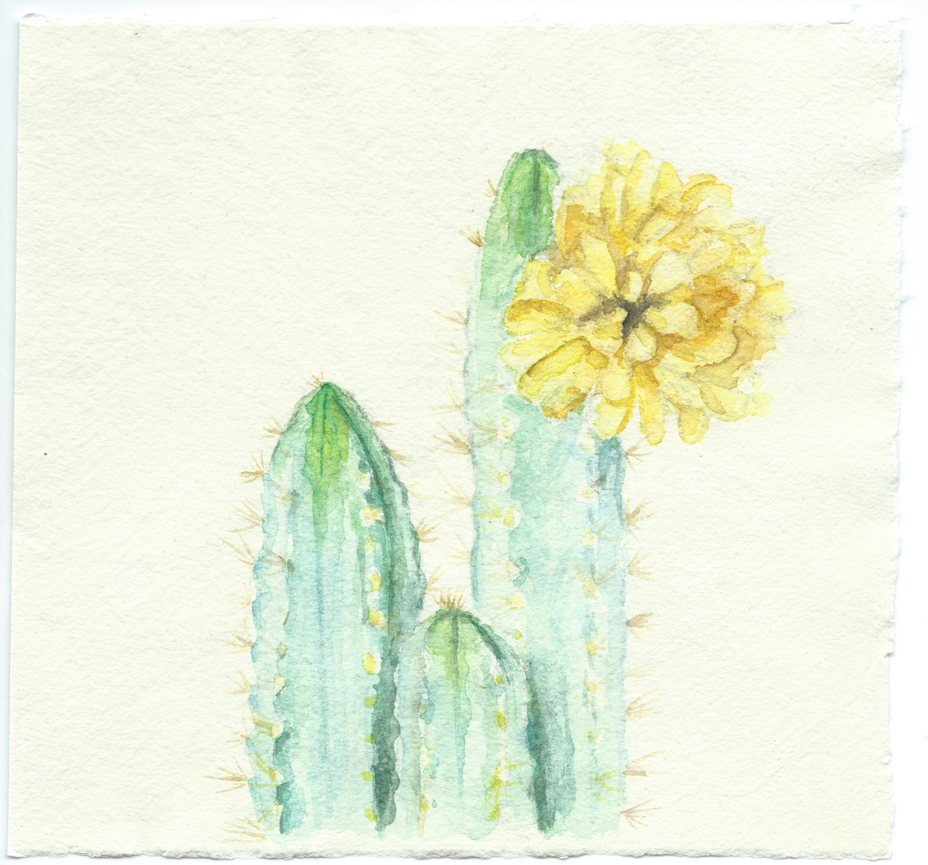 The Fancy Friend Original Cactus With Yellow Flower Etsy