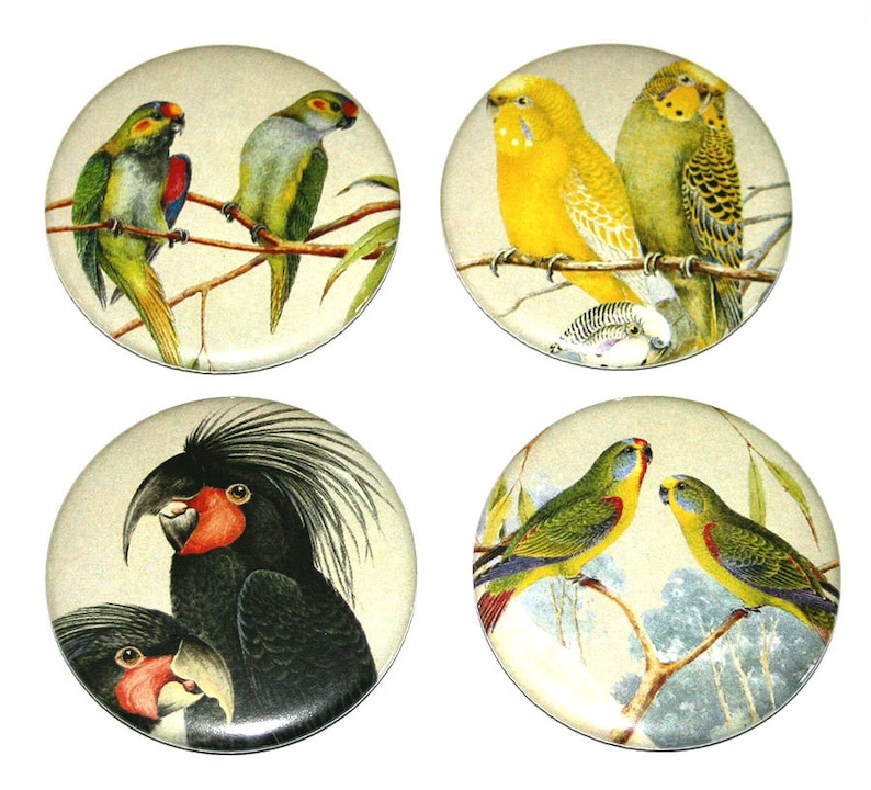 Australian Birds  Set of 4 Large Fridge Magnets bird wild image 0