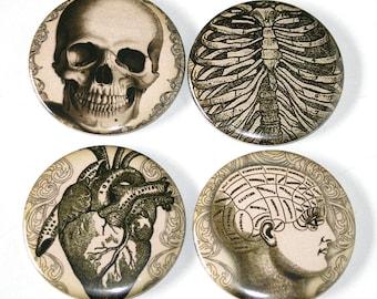 Human Anatomy Vintage Illustrations - Set of 4 Large Fridge Magnets