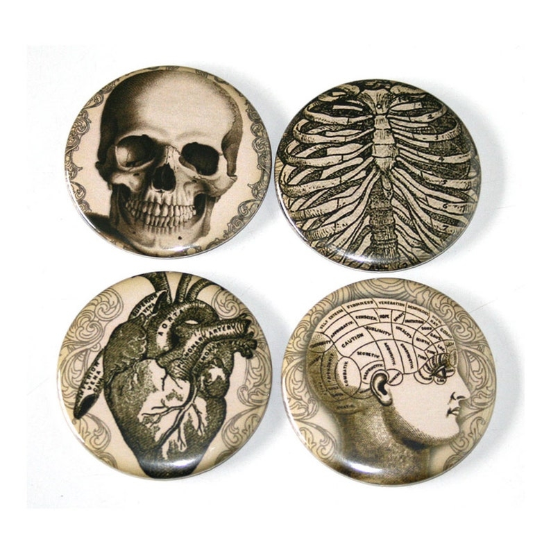 Human Anatomy Vintage Illustrations  Set of 4 Large Fridge image 0