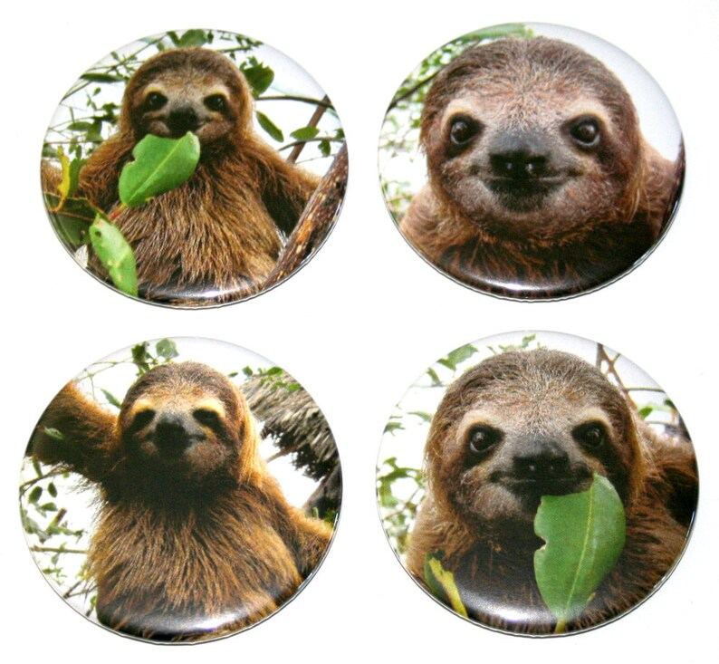 Super Cute SLOTHS  Set of 4 Large Fridge Magnets image 0