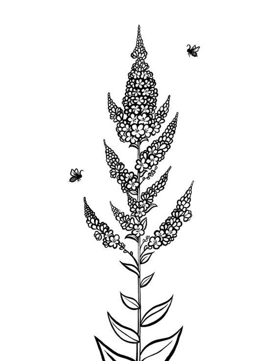 Mullein Flower and Honeybees Raw Black and White Coloring Page Art Print on Quality Matte Bristol Paper