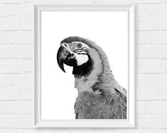 Parrot Print - Parrot Printable Art - Black and White Decor - Nursery Parrot Art- Instant Download Bird Wall Art - Bird Digital Photo