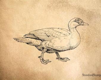 Muscovy duck | Etsy
