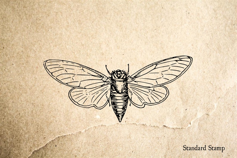 Cicada Rubber Stamp 3 X 2 Inches