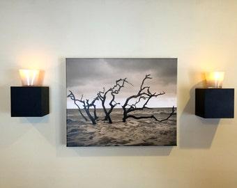 canvas~driftwood