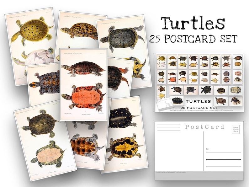25. Turtles Postcard Set