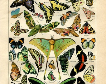 """Butterflies - Antique French Lithography 1898's  - Zoological Print  - 7.8"""" x 11.4"""" - A10"""