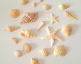 20 edible sugar seashells.  Handmade to order, colours can be altered to suit your cakes.