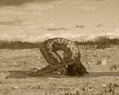 Golden Bronze Snake Skin Rabbit Pose Yoga Art Print Signed on Reverse by Deprise Brescia
