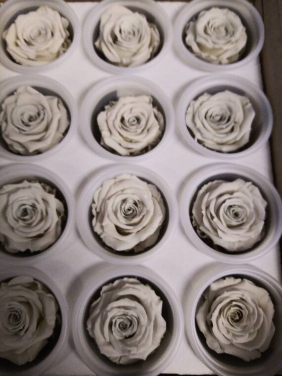 Preserved* Natural lovely Roses Roses for Bouquet Rose Bouquet Preserved Rose Bouquet  Simply Beautiful ! Preserved White Roses