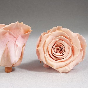 .tg 6 mm Tiny Peach Little Resin Rose Flowers