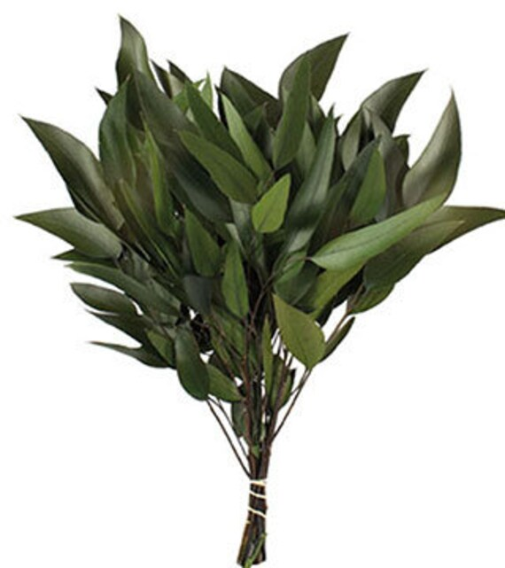 Eucalyptus Preserved Willow