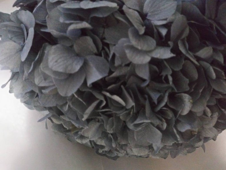 Dark Gray Color Preserved Hydrangeas Large Hydrangeas Simply Beautiful !!!! Large Hydrangea Stems Gray Color Hydrangeas