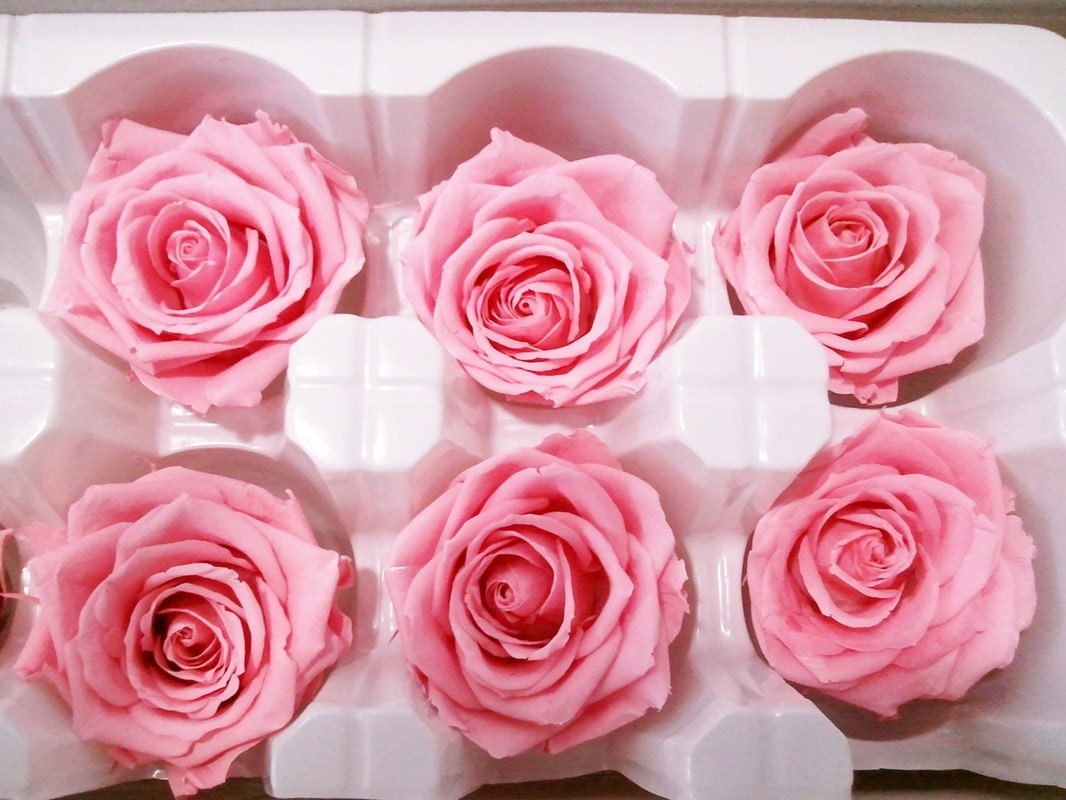 Preserved Natural Lovely Pink Roses Simply Beautiful Etsy