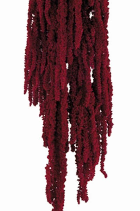 Amaranthus Preserved Hanging Amaranthus Simply Beautiful