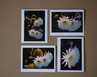 ARGENTINE GIANT CACTUS Set of 4 Blank Photo Note Cards