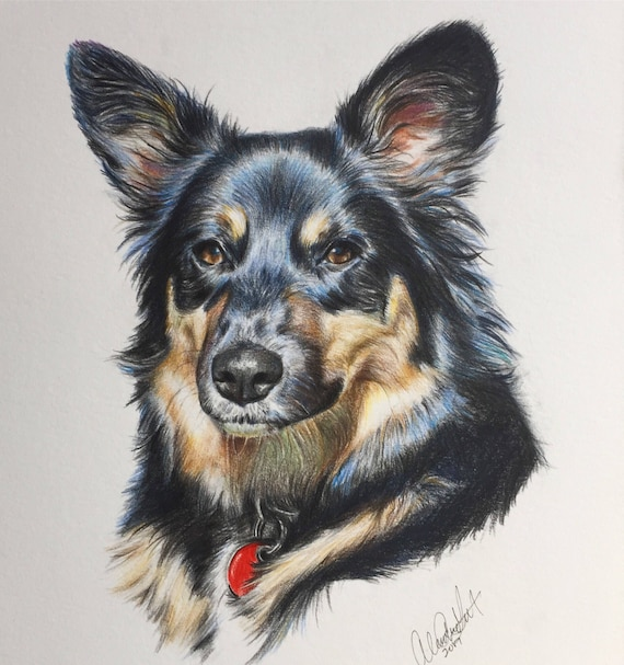 Custom Lifelike Outfitted Pet Portrait Hand-drawn from Photo with Colored Pencil