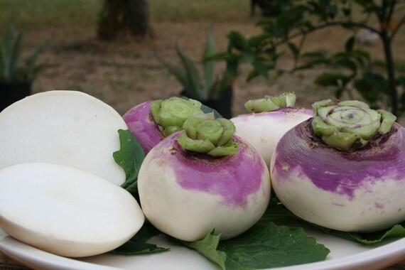 Delicacy White 900 Seeds Vegetable Kohl Rabi