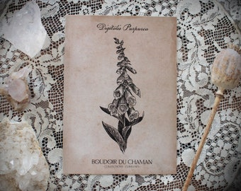 Digitale. print of antique illustration from 17th century decoration botanical witchcraft vintage magic .