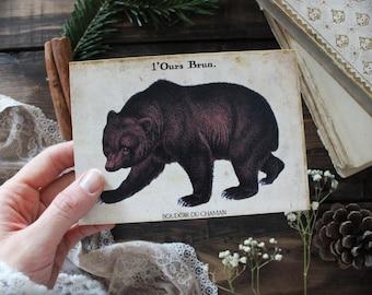 Winter bear . print animal vintage illustration antique cozy decoration pagan magic  .