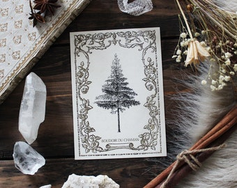 King of Forest . print of antique illustration from 19th century decoration botanical witchcraft vintage magic .
