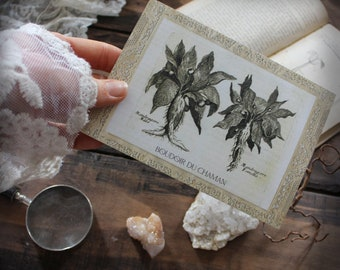 Couple of Mandrake . print of antique illustration from 17th century decoration botanical witchcraft vintage magic .