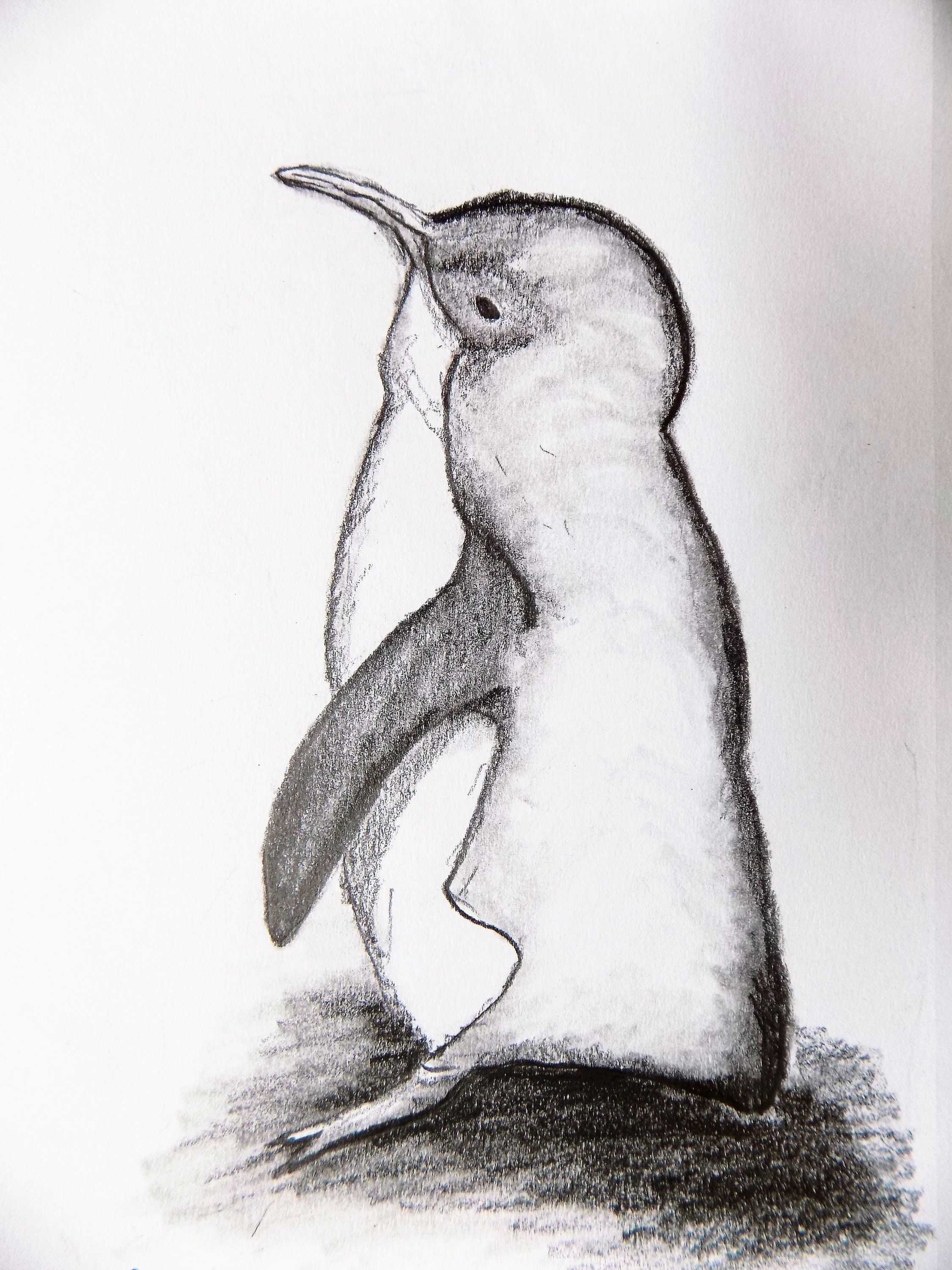 Drawing of penguin pencil sketch graphite drawing original pencil drawing little blue penguin