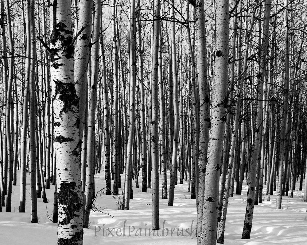 Winter birch bead 63