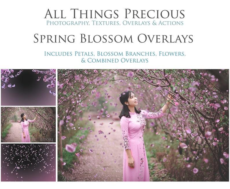40 SPRING BLOSSOM Overlays / Photoshop Overlays Falling image 0