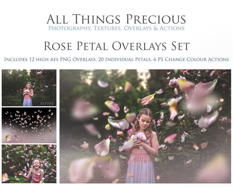 35 ROSE PETAL Png Overlays 6 Colour Changing Photoshop image 0